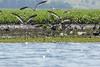 DSC01914 (Mario C Bucci) Tags: verde do eduardo garça tuiuiu dinan bigua banhado ratão anhambi tanquã tanquan