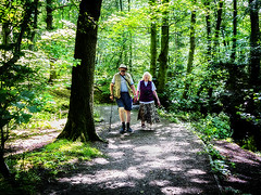 461_3428_09-06-13 (homewurks) Tags: park wood old trees woman sun man tree male sunshine lady female forest john walking photography holding hands woods couple cheshire path walk sunny trail elderly trunk stick trunks dappled pathway gentleman hopkins dapple marbury comberbach homewurks vigilantphotographersunite