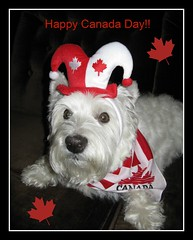 "6/12B ~ ""Proud to be a Canadian"" (ellenc995) Tags: friends riley flag westie mapleleaf westhighlandwhiteterrier canadaday july1 coth supershot akob abigfave anawesomeshot citrit pet100 concordians rubyphotographer 100commentgroup yearofholidays challengeclub coth5 naturallywonderful christmaspicturegallery thesunshinegroup sunrays5 12monthsfordogs13 challengeclubchampion"