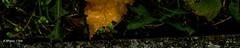 touch the border (R-Pe) Tags: life blue red white black rot eye art robert water coffee caf smile face breakfast night train canon square photo essen gesicht wasser noir day foto mask nacht live tag fine wiese kaffee zug security ferrari bleu peter hut trainstation rosen blau augen lachen trinken bahn wald schwarz chai figur acryl leben maske pastell masken ingwer larve blaw bahnstation 1764 tschai rpe rbi 1764org www1764org