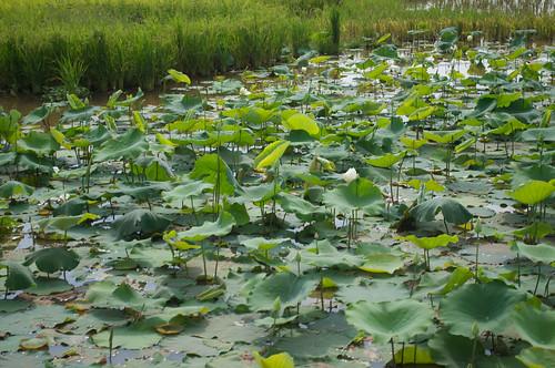 2012-03-09 1446a  Cambodia
