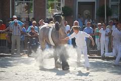 trekpaardkeuring ijzendijke 21072013 3772 (jo_koneko_san) Tags: horses horse holland netherlands cheval nederland zeeland chevaux paard hollande zeeuwsvlaanderen 2013 ijzendijke parden trekpaard zeeuwstrekpaard trekparden