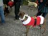 JingleBellWalk2010013