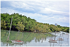 Bakawan of Mactan (Bren Aldy Cabatic Adre) Tags: mangrove cebu mactan bakawan