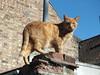DSCF6361 (Moldovia) Tags: fujifilmfinepixhs20exr cat pet animal feline ginger catnipaddicts catspotting catpix catalog catmoments catsunleashed outdoor bridgecamera