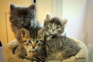 Vinny, Dora, & Ozzie