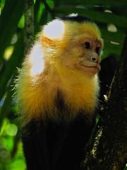 Manuel Antonio 212 (xotico) Tags: naturaleza verde mar costarica natural selva playa animales manuelantonio reserva salvaje xotico xoticosphotos