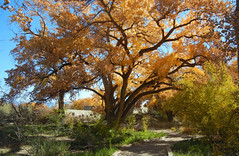 Visitor's Center; Albuquerque, NM, Rio Grande Nature Center, [Lou Feltz] (deserttoad) Tags: road park autumn trees mountain newmexico nature clouds shadows scenic science geology cottonwoods