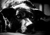 Tida (tolltroll11) Tags: hund bardino