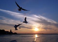 An evening in Kolobrzeg (pietkagab) Tags: travel sunset sea seagulls lighthouse beach water birds evening europe kodak poland baltic kołobrzeg mygearandme mygearandmepremium mygearandmebronze