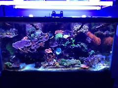 120 Gallon Display Reef (jnroehrig) Tags: fish aquarium tank clownfish anemone reef corals saltwater sps acropora montipora frags vision:mountain=0626 vision:sky=052 vision:outdoor=0932