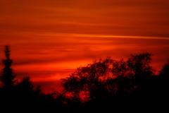 Red Sky (fred.sommer11) Tags: trees orange cloud sun black tree rot silhouette catchycolors sonnenuntergang desert himmel sonne