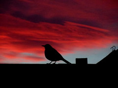 bird (daedmike) Tags: sunset shadow bird crimson silhouette clouds weird dundee angus apocalypse eerie avian carnoustie