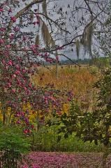 (JGou) Tags: usa southcarolina charleston magnoliaplantation jgou