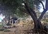 The Roman rock tombs behind an old olive tree (VillaRhapsody) Tags: site roman historical fethiye lykia lycian tlos preroman