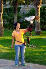 2008-09-16 19-16-45 K20D IMGP1359ak (ossy59) Tags: pentax vulture k20 hayat buitre geier peniscola da1855 palmnutvulture buitrepalmero k20d refugioderapaces smcpda1855mmf3556alii palmgeier artehalcon halconestemplarios