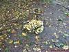 """Ede Gelderla            05-10-2008         40 Km (64) • <a style=""""font-size:0.8em;"""" href=""""http://www.flickr.com/photos/118469228@N03/16419700101/"""" target=""""_blank"""">View on Flickr</a>"""