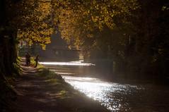 Canal du Midi, Carcassonne (picturewallah) Tags: france carcassonne contrejour towpath canaldumidi