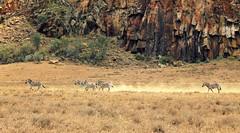 zebras. (Giada Babino) Tags: world africa park travel flowers trees red sky nature beautiful animals landscape gate colours hand natural kenya lovers national experience zebra send reach hells savana