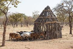 Himba - Namibia (wietsej) Tags: animal sony namibia 70200 himba a900 sal70200g