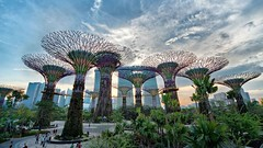 Gardens by the Bay, Singapore (celebrityabc) Tags: travel vacation holiday tourism nature singapore events culture documentary 360 landmark tourist best wanderlust adventure backpacking talent hero motorcycle destination traveling top10 epic rtw filmfestival motivational traveler monopod selfie chacon worldtravel aroundtheworld socialmedia gopro influencer latinamericaregion top2016 epicselfie selfiepole viralvideofilmgenre traveltvgenre goproawardwinningwork bestof2016 backpackingsport compilationfilmfilmgenre