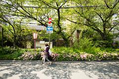 (sunnywinds*) Tags: leica summer sunlight spring kyoto walk  dappled     summiluxm11421mmasph