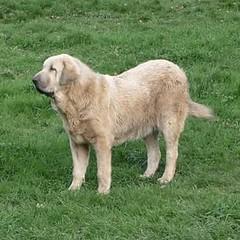 Esta cachorrina de 1 año busca un hogar. Intentaremos buscarle un buen sitio entre todos.