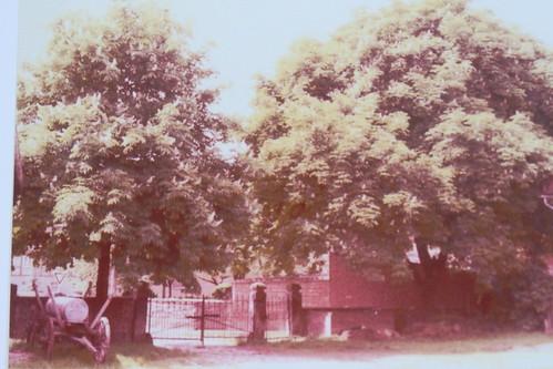 Hofeinfahrt mit 2 großen Kastanienbäumen in dem ein UHU wohnte
