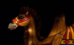 _DSC9677_2 (Elii D.) Tags: light fish flower animal night zoo monkey neon dragons lantern lampion dargon