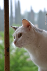 thea (ELENA TABASSO) Tags: cats animal animals cat gatti animali animale tto