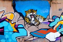 Roma. Ex-Fiera di Roma. Graffiti for '9 years of Graff Dream'-The Maya theme. By Nina, Orgh. Detail (R come Rit@) Tags: urban italy streetart rome roma muro art wall photography graffiti montana italia arte maya puppet streetphotography wallart spray urbanart theme walls nina graff aerosol aerosolart topic colombo graffitiart muri sprayart arteurbana 9birthday graffitirome italystreetart ardeatino graffdream orgh streetartitaly exfieradiroma romegraffiti graffitiroma streetartrome streetartphotography romastreetart streetartroma romestreetart urbanartroma ritarestifo romeurbanart mayatheme 9yearsofgraffdream