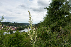 Kallmnzer Ansicht (Wilhelm v. Kallmnz) Tags: markt landschaft burg kallmnz sonydscrx100 burgaufgang