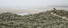 Dune Buddy (yadrad) Tags: mist southwest beach seaside cornwall dune estuary grasses sanddune seamist hayle porthkidneybeach fujixe1 fuji1024