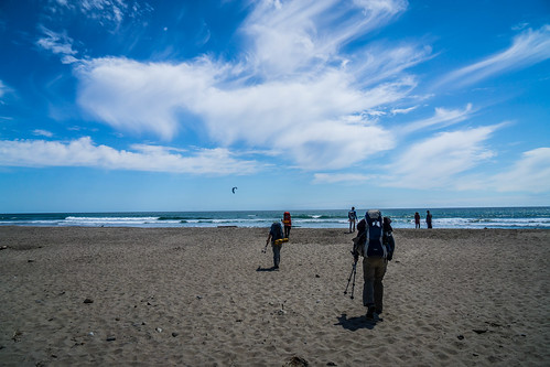 Waddling to Waddell Beach