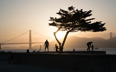 Tree at Sunset - Crissy Field - San Francisco, CA (ChrisGoldNY) Tags: sf sanfrancisco california trees people usa northerncalifornia america children parents forsale sony parks silhouettes bridges landmarks sunsets goldengatebridge bayarea albumcover nocal bookcover bookcovers californian albumcovers crissyfield licensing unanimous sonyalpha challengewinner challengefactory sonyimages chrisgoldny chrisgoldberg chrisgoldphoto sonya7rii a7rii