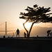 Tree at Sunset - Crissy Field - San Francisco, CA