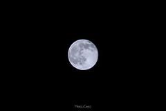 Moon - Luna (Palermo Finestra sul Mondo) Tags: luna moon notte night astrofilia astrofilo sacra sacredmoon nero black cielo sky astronomia astronomy passione passion love amore