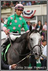 Pure Sensation (Spruceton Spook) Tags: horses horseracing jaipur belmontpark puresensation