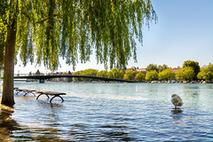 Lake Constance Flooding 2016 (kaufenstein) Tags: bridge summer sun water juni deutschland tiere weide flooding wasser europa flood sommer bank brcke fluss bodensee region landschaft sonne rhein schwan bume konstanz baum wetter bnke florafauna hochwasser pegel 2016 lakeconstance badenwuerttemberg flus seerhein fahrradbrcke bodenseehochwasser