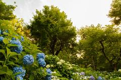 34Yamada Pond Park (anglo10) Tags: sunset flower japan