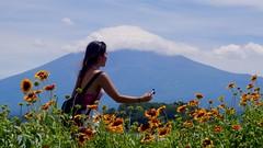Mount Fuji (Steve Burgess1) Tags: japan mountfuji girl flowers mountain clouds