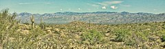 'WILDERNESS. THE WORD ITSELF IS MAGIC (Irene2727) Tags: cactus nature cacti landscape sand desert scape sonorandesert catalinamountains