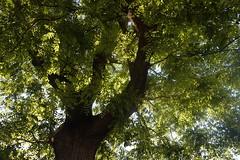 Verano (mati-hari) Tags: verde hojas arbol ciudad tronco rama vegetal