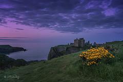 Dunnattor Castle Schottland (Claudia Bacher Photography) Tags: castle clouds scotland meer eveningsun wolken ginster burg schottland felsen abendstimmung blauestunde dunnattorcastle dunnattor