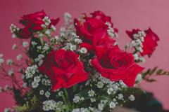 IMG_4152 (Josy'ta) Tags: rose rosas rosascolombianas flowers flores flor diadosnamorados love
