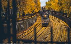 Yellow Brick Road (benpsut) Tags: railroad autumn fall us pittsburgh unitedstates pennsylvania ns trains fallfoliage trench norfolksouthern yellowbrickroad prrsignal ns9667 prrsignalbridge nsconemaughline ns590
