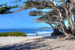 The Golden Years (KC Mike D.) Tags: couple years golden sea ocean pacific tree withered