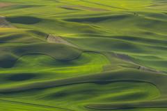 Green acres (Howard Ryder) Tags: sunset nikon farmland fields nik washingtonstate cpl palouse easternwashington whitmancounty steptoebutte d810 lrcc pscc upperleftusa ryderphotographic howardryder nikkor200400mmafsf4gedvr