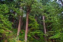 DSC_1944 (Amishrit) Tags: mountain snow rock forest garden landscape temple shimla flora nikon manali kulu chandigarh kufri rohtang hadimba d7100 vasista