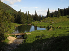 Alpine idyll (aniko e) Tags: mountains spring cows hiking sommer meadow alpine alp chiemgau chiemgaueralpen prienerhtte